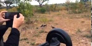 Cheetah and cubs on safari at Sabi Sabi
